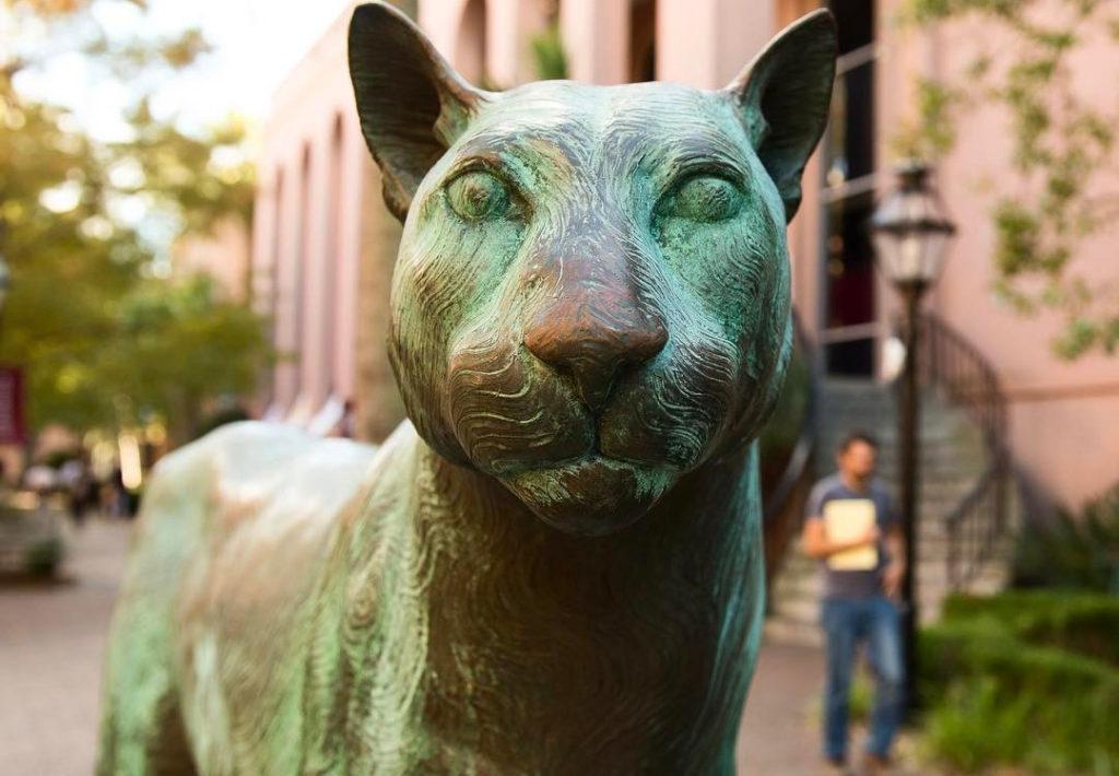 college cougar